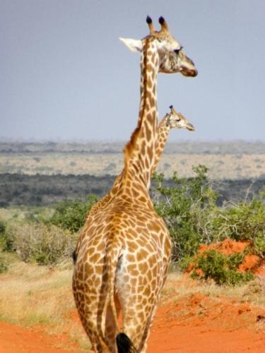 Charlotte au Kenya
