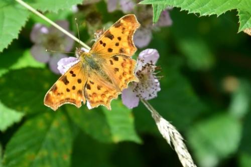 Chloé - Papillons